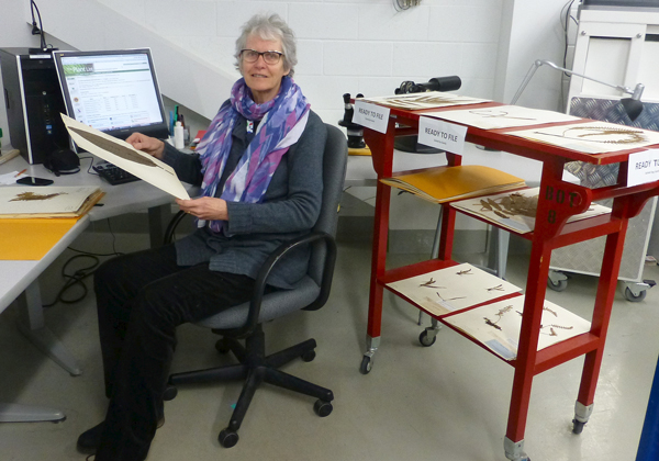 A woman sits at a computer with herbarium specimens.