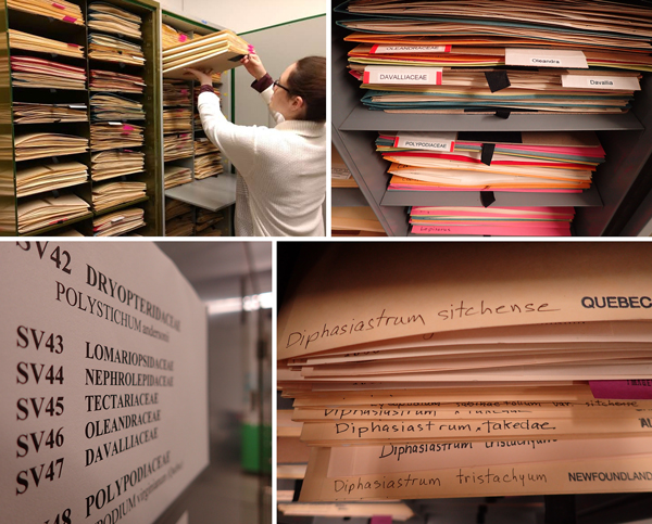 A woman removing folders in the collections.