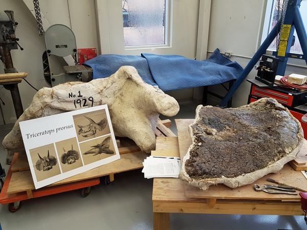 Two fossil specimens on wooden supports in a workshop.