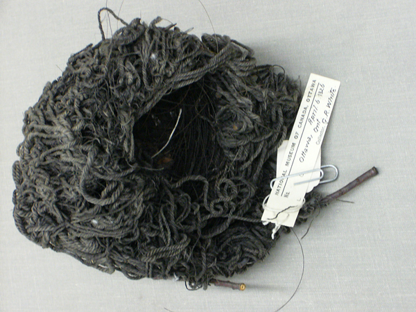 A relic from the past: this bird's nest dating back to 1925 is made of mop strands and horsehair. It is covered in coal dust.