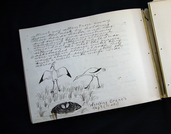 An old notebook with notes and a sketch of a pair of Whooping Cranes.