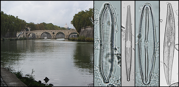 A collage including a bridge over a river and several phytoplankton samples