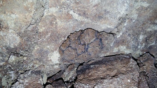 Fossil skin impression.