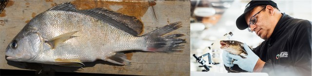 On the left, a fish on a dock; on the right, a man with latex gloves holding a fish.