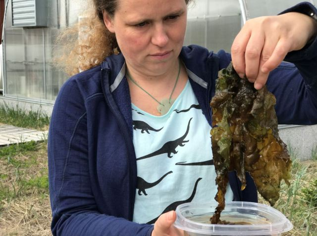 Woman with brown curly hair, navy sweater and dinosaur t-shirt is holding up in the air in front of her wet seaweed-like Nostoc that she has removed from a container filled with water. In the background is a building surrounded by grass.