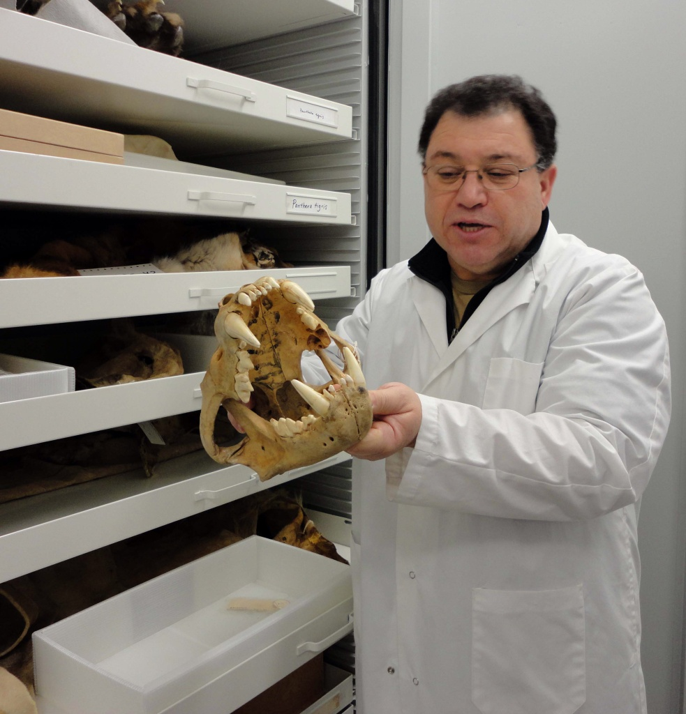 A man in a white lab coat holding the skull of an animal in front of drawers that contain other animal bones.