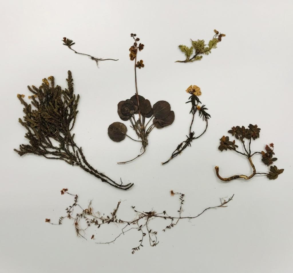 Plants laid out on a plain background.