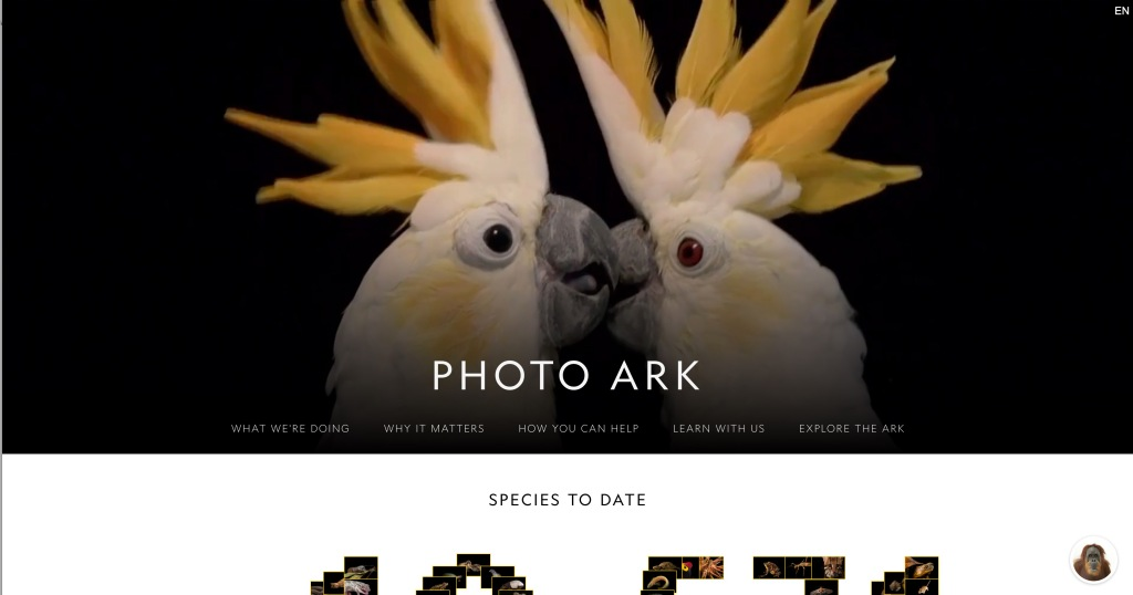 Image of a photography website.